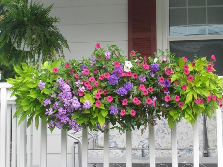 Best Beautiful Cascading Flowers For Window Boxes Ideas 36