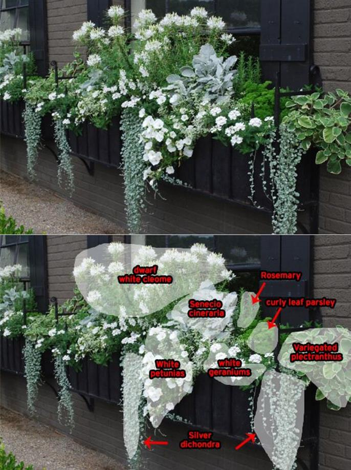 Best Beautiful Cascading Flowers For Window Boxes Ideas 9