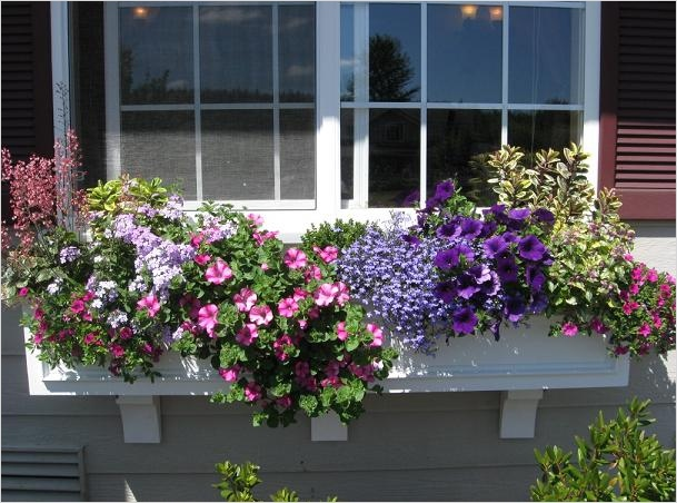 42 Best Flowers for Window Boxes 82 Best Plants for Window Boxes 4