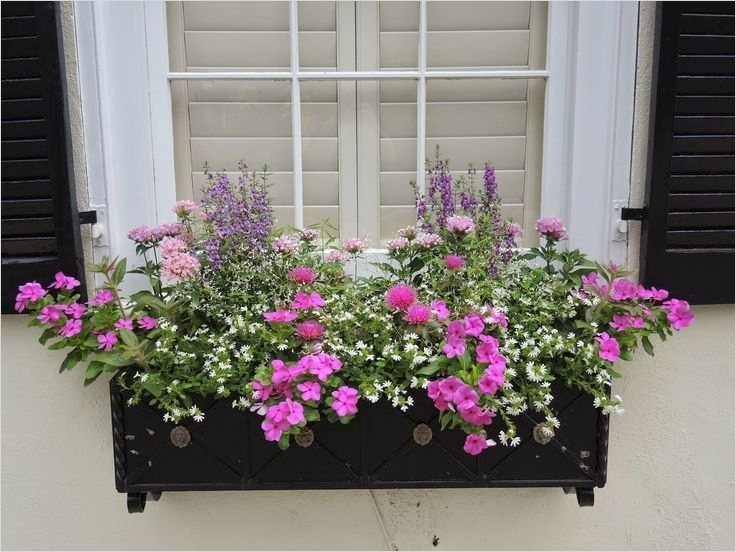 42 Best Flowers for Window Boxes 14 Window Boxes Cape Cod Lovely Best Flowers for Planter Boxes 4 8