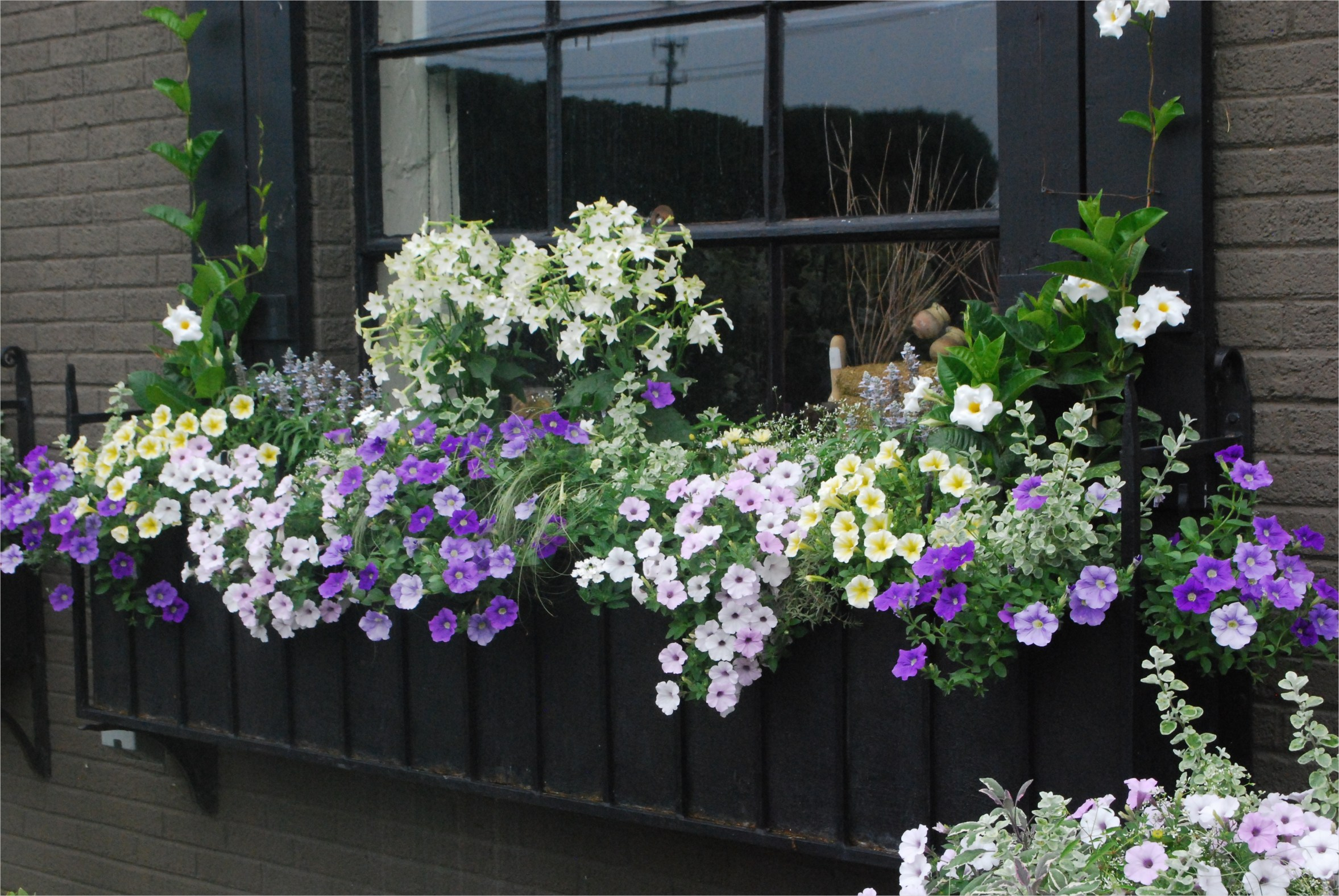 42 Best Flowers for Window Boxes 24 Container Gardening 5