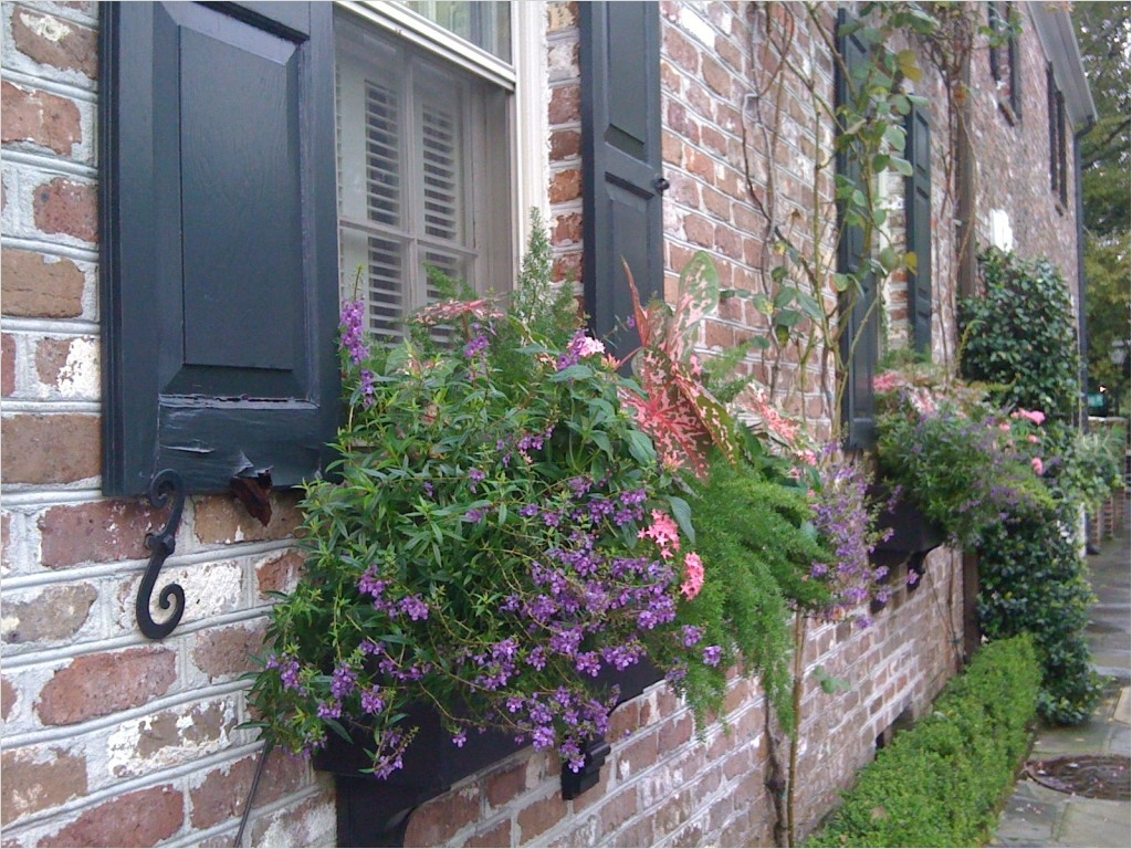 42 Best Flowers for Window Boxes 31 11 Of the Best Flowers for Window Boxes 9