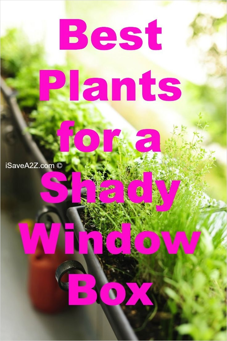 42 Best Flowers for Window Boxes 91 Best Plants for A Shady Window Box Plants Shady Window Box 3