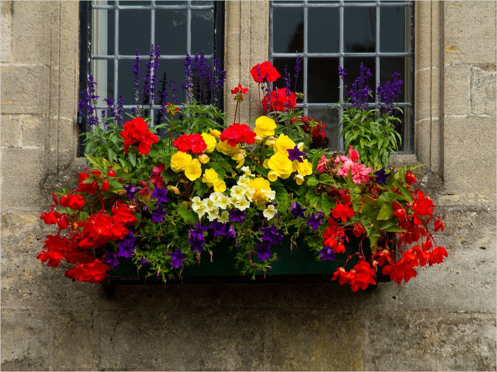 42 Best Flowers for Window Boxes 74 Window Box Window Box In the Market Place Wells somerset… 2