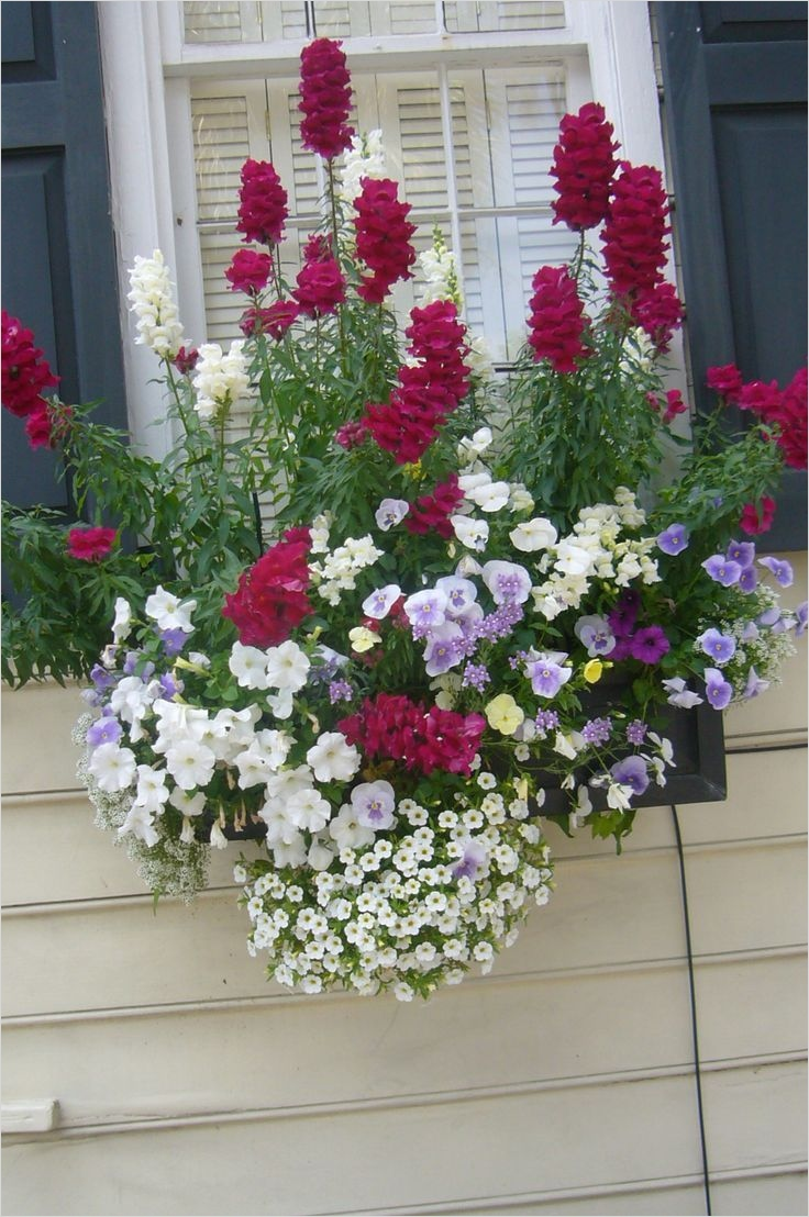 42 Best Flowers for Window Boxes 27 220 Best Images About Window Boxes On Pinterest 4