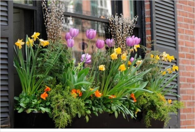 42 Best Flowers for Window Boxes 74 Gardening Tips Best Flowers for Window Boxes 9