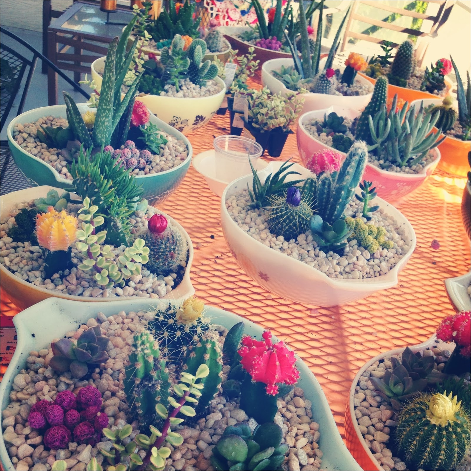 43 Beautiful Cactus Centerpiece Ideas 14 Loose Shoelaces Diy Cacti Wedding Centerpieces 6