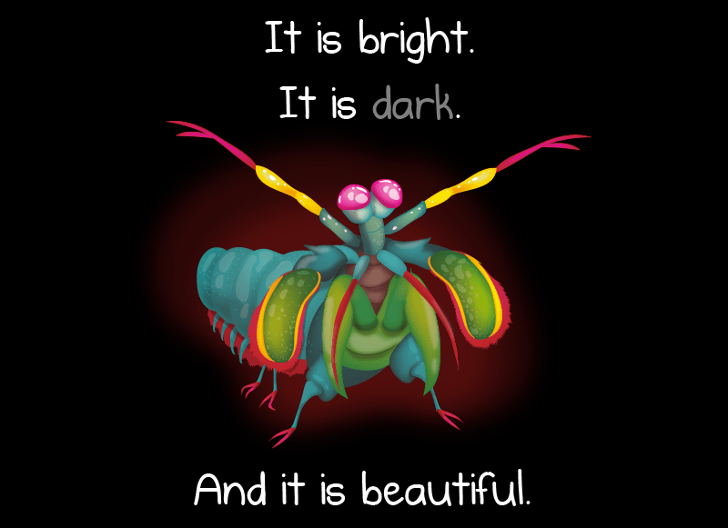 We laugh: Why the mantis shrimp is my favorite animal ...