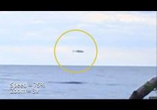 Di Depan Kampus Gontor di Poso: Lumba-lumba atau Tuna? – Tertangkap Kamera