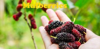 health benefits of mulberries