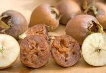 Medlar - Maybe The Best Fruit You've Never Heard Of