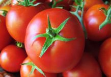 Nutrition Facts And Health Benefits of Tomatoes