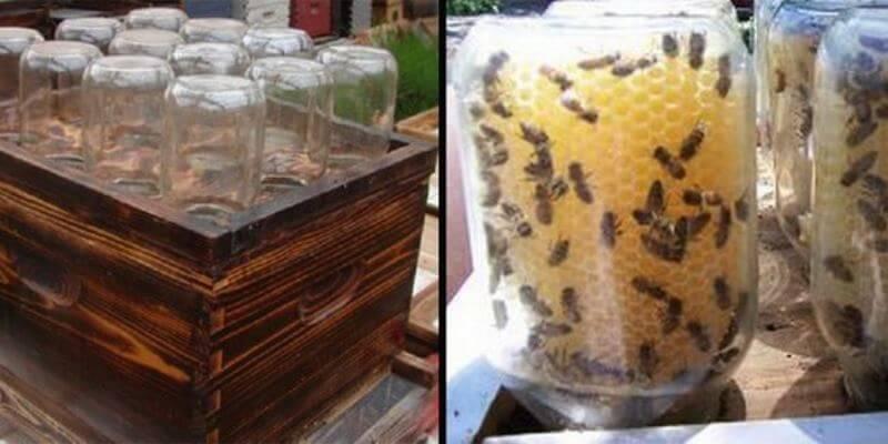 Homemade Beehive