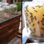 this-guy-invented-a-homemade-beehive-to-save-the-bees-and-its-going-viral-800×400
