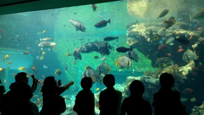 美ら海水族館の水槽1