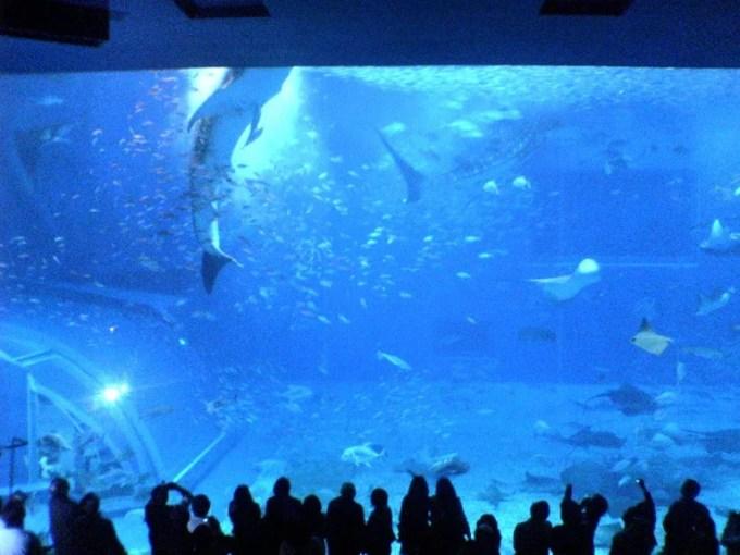 美ら海水族館でジンベエザメが餌を食べている時の写真