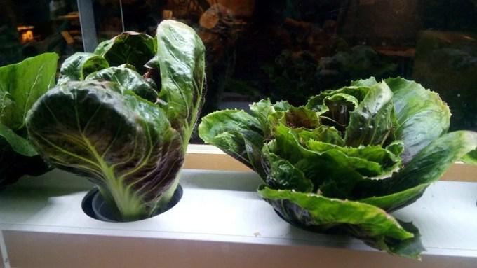 Okinawa vegetables brought up in the Karakara 2