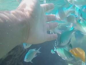 糸満の大度浜海岸ビーチはシュノーケリング初心者でも子供でも熱帯魚と一緒に泳げます