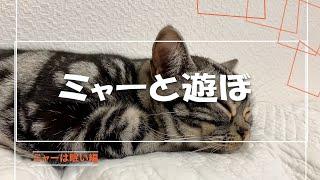 ☆ミャーと遊ぼ 「眠い編」「グッドプランナーズ」プロモーション動画のサンプル。
