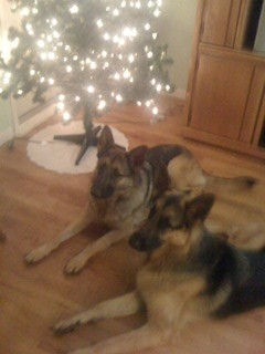 German Shepherds, Christmas Tree