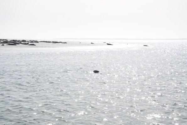 zeehonden vlieland
