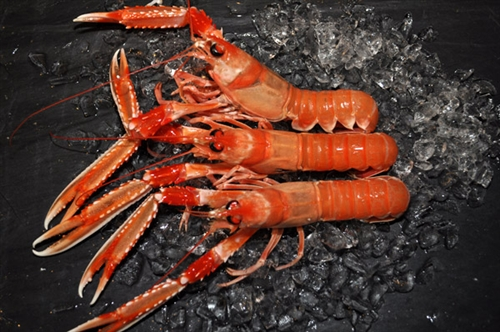 In my mind there are few things finer that Langoustines fresh-out-of-the-chilly-Scottish-waters.