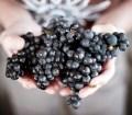 Credit: NZW Inc. Gladstone Vineyard Pinot fruit. Pic: Mike Heydon