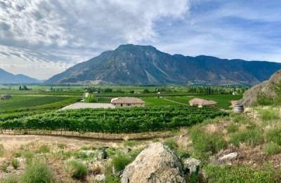 Vines in the Similkameen Valley