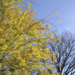 The Fading, Falling Leaves