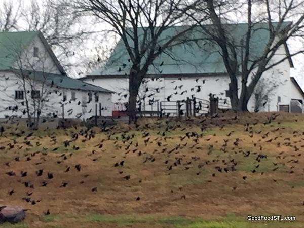 black bird farm *