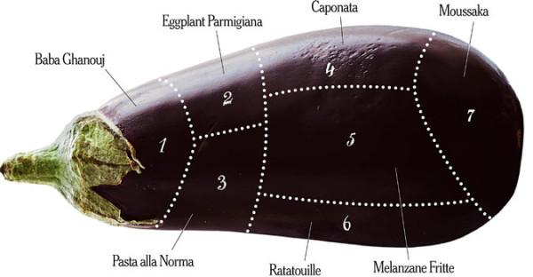 eggplant diagram