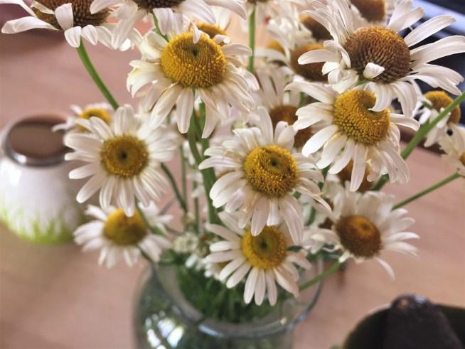 daisies wildflowers