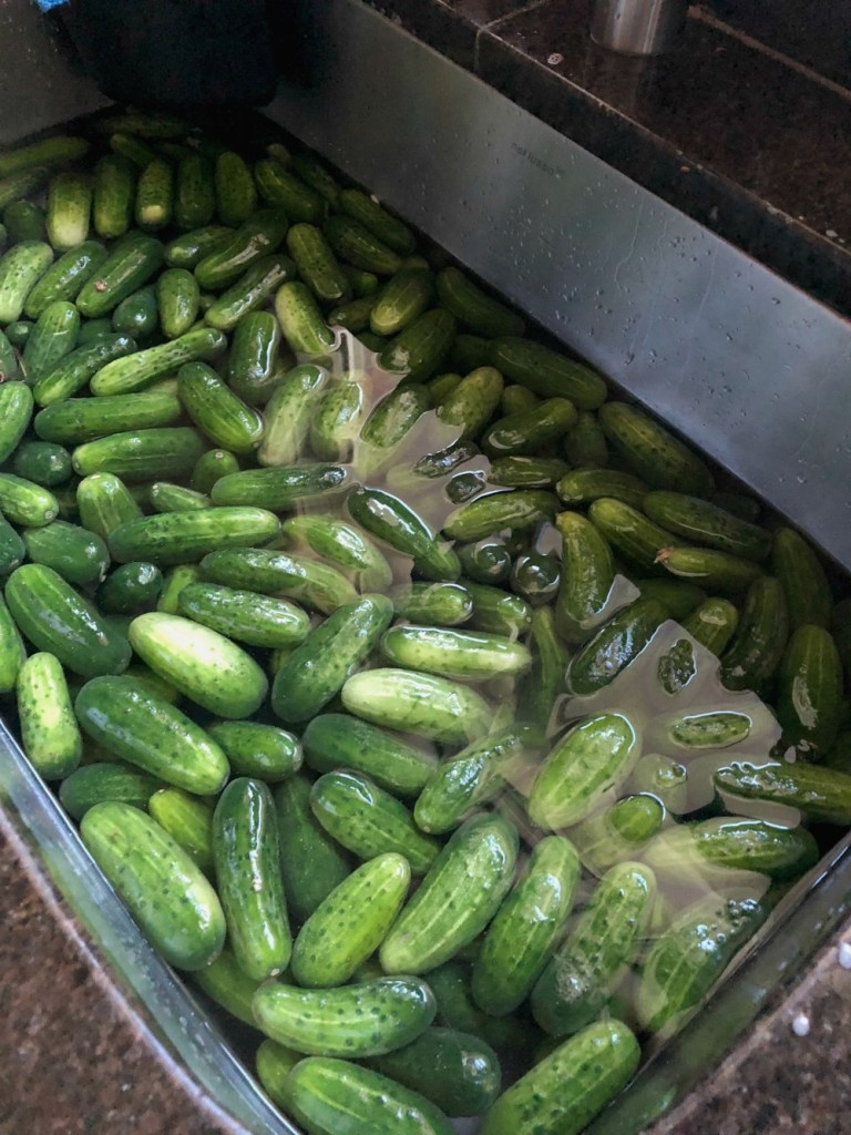 Giving the pickles a bath