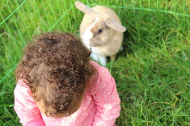 Mijn kind wil niet in de box_GoodGirlsCompany_kind in konijnenhok