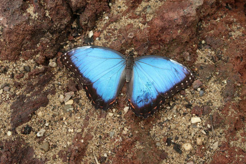 Burgers_Zoo_Mangrove_vlinders