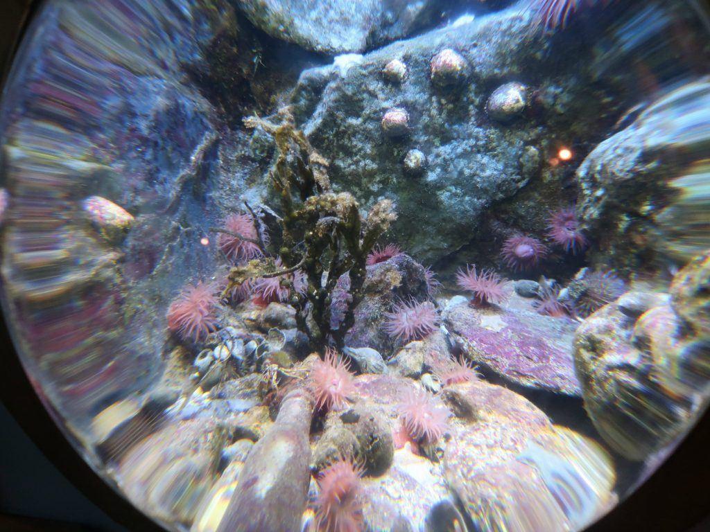 The National Marine Aquarium exibit