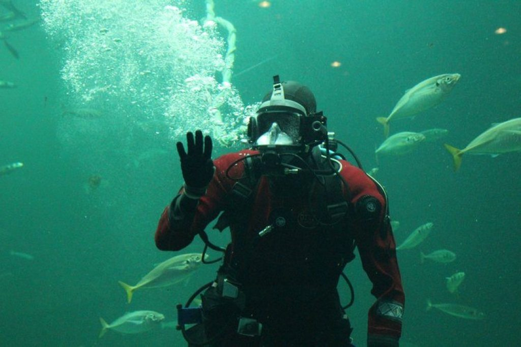 Nordsøen Oceanarium zeedieren voeren
