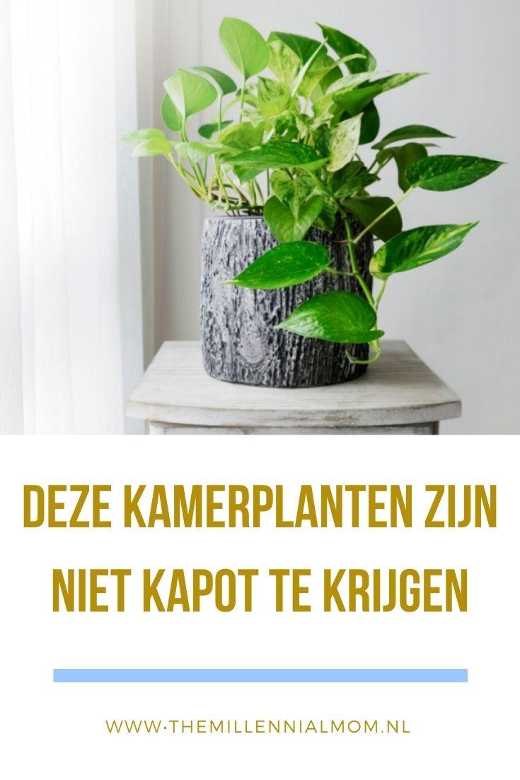 kamerplanten die niet doodgaan