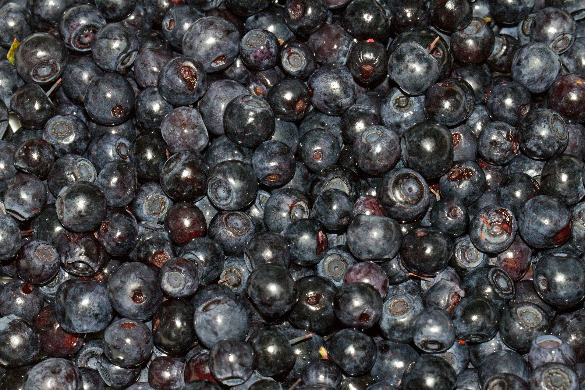 superfood blueberry