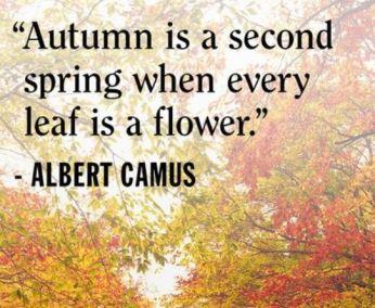 Best Autumn Instagram Captions