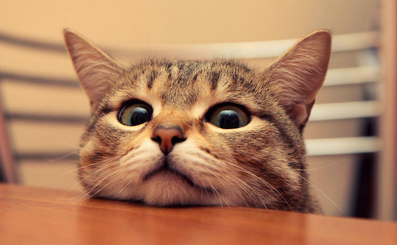 60 Best Cat Instagram Captions Cute Funny Ig Captions