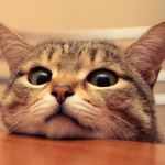 60+ Best Cat Instagram Captions [Cute & Funny]