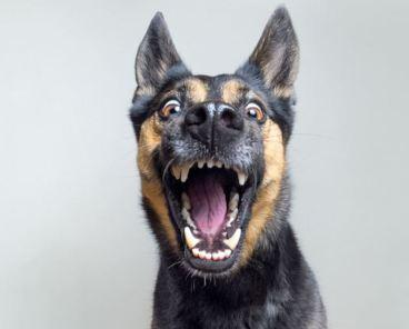 Funny Dog Instagram Captions