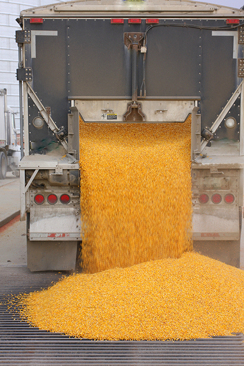 Corn Dumping Out of Iowa Truck