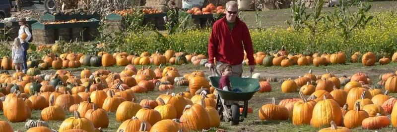 top-pumpkin-patches
