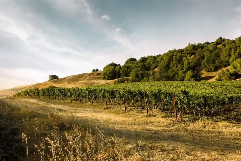 Pfendler Vineyard Sonoma Coast Vineyard