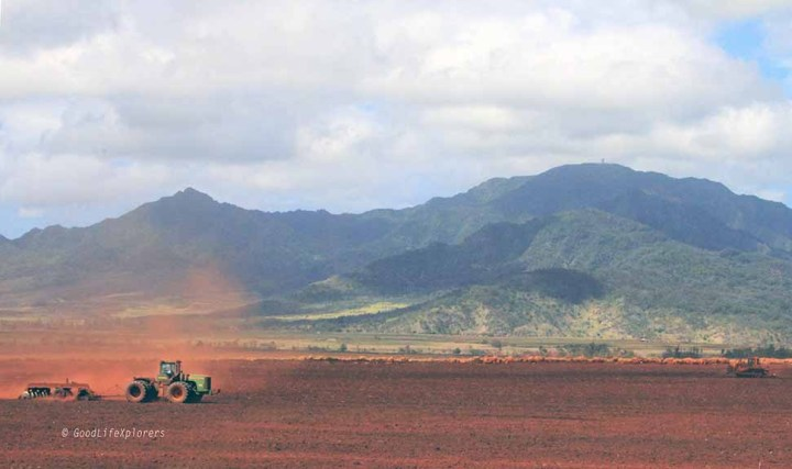 This is the Dole Pineapple  plantation. The red dirt contrast is stunning.