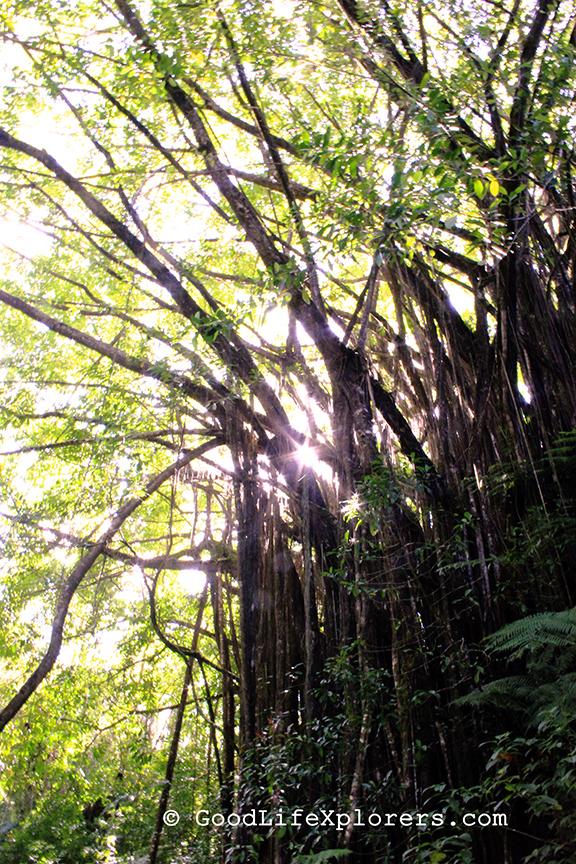 Hawaii, Akaka Falls, Hiking, Big Island