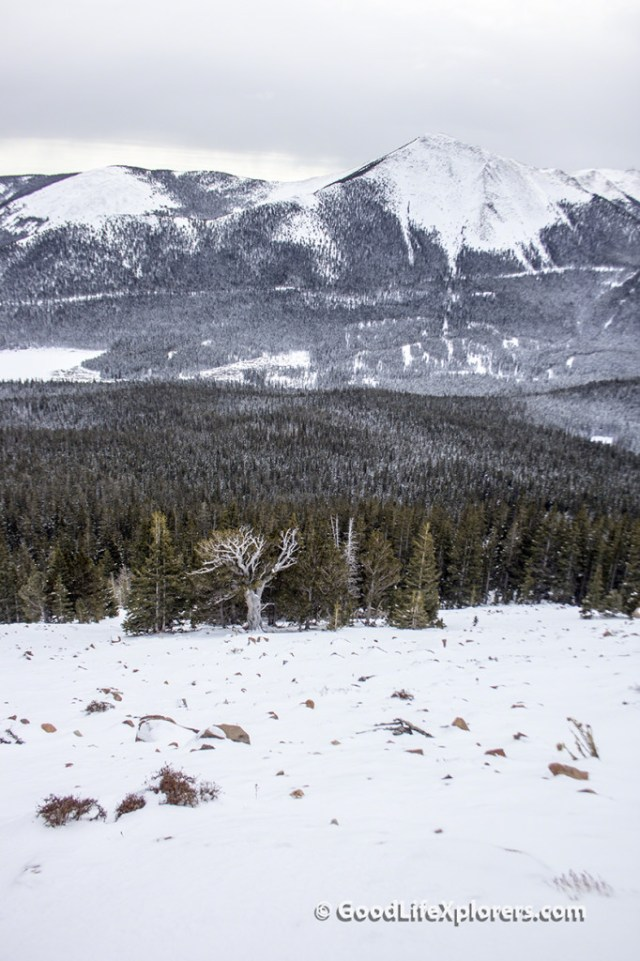 Pike's Peak Mountain and old tree