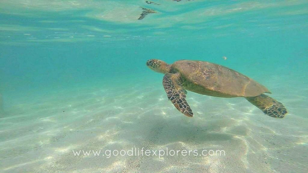 Oahu, Hawaii, Sea Turtle